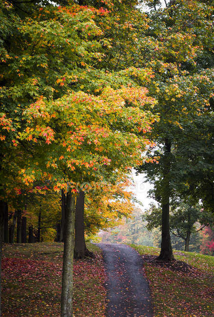 Path among trees and autumn leaves — Photo de stock