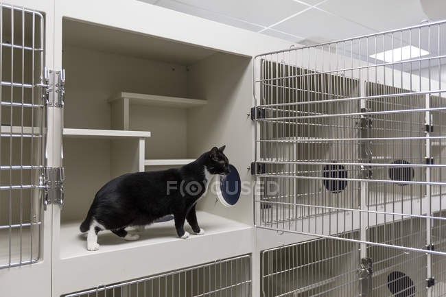 Cat standing in open cage in animal shelter — Stock Photo