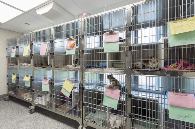 Kittens and cats sitting in cages at animal shelter — стокове фото
