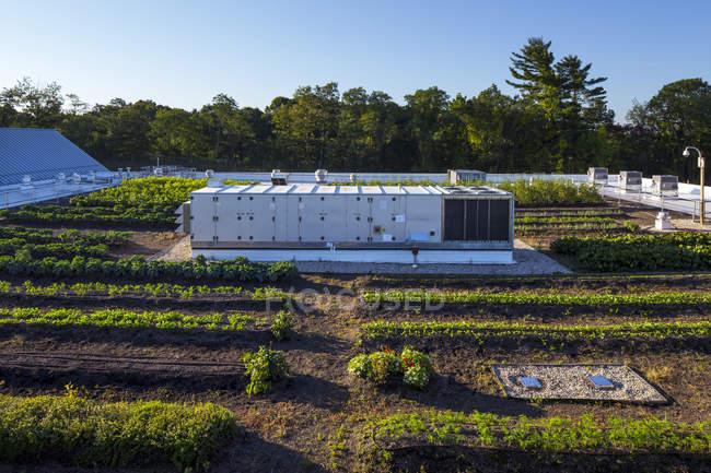 Generador en el jardín urbano de la azotea en el campo - foto de stock