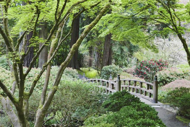 Wooden bridge in Japanese Garden, Portland, Oregon, United States — Stock Photo