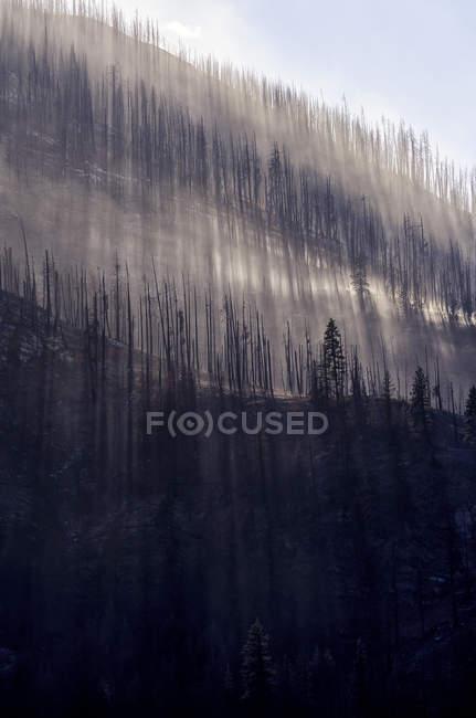 Vue en angle bas des arbres brûlés sur le flanc de montagne rural — Photo de stock