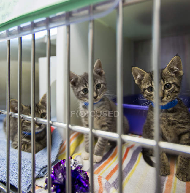 Kittens sitting in cage at animal shelter — Stock Photo