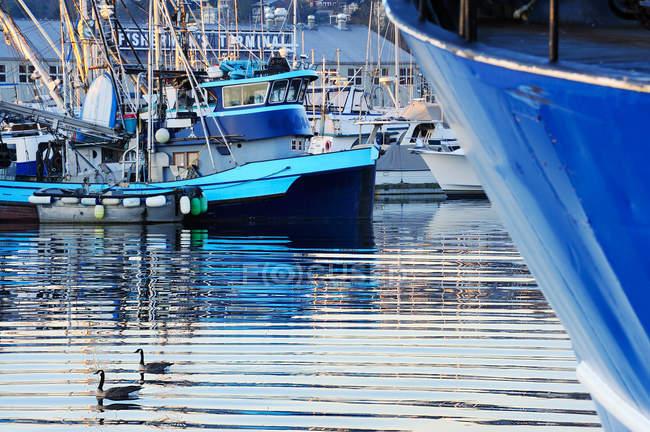 Ducks swimming in urban harbor with marine ships — Stock Photo