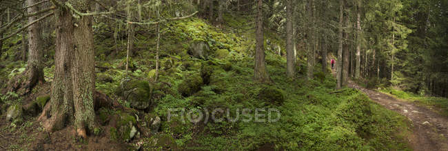 Panoramic view of woman walking on Mt Blanc trail in forest, Switzerland — Stock Photo