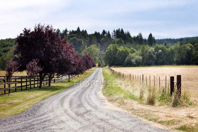 Camino de tierra entre las plantas de césped en el paisaje rural - foto de stock