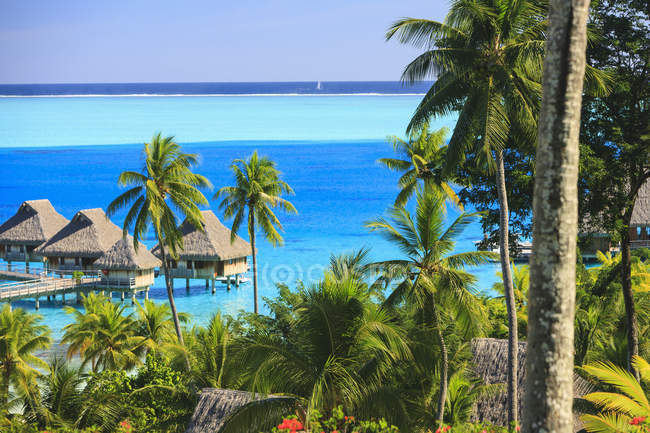 Palme con vista sulla località tropicale, Bora Bora, Polinesia Francese — Foto stock