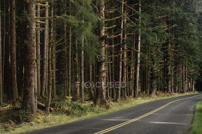 Trees and forest lining by rural road — Stock Photo