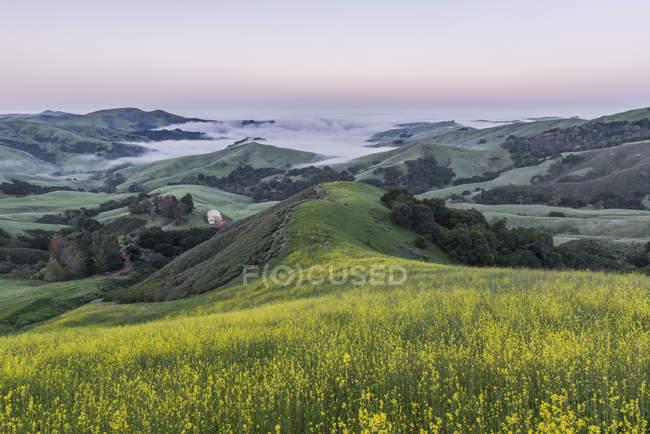 Rolling paesaggio visto da collina erbosa a Paso Robles, Stati Uniti d'America — Foto stock