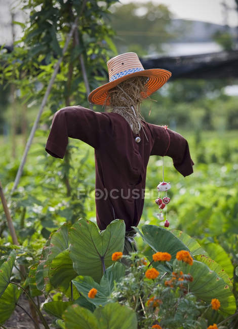 Scarecrow in crop field with green plants and flowers — Stock Photo