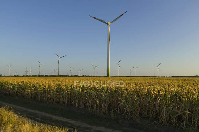 Wind turbines in rural farm field — Stock Photo