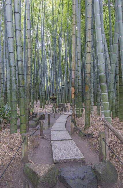 Stone sculpture in bamboo forest in Kamakura, Japan — Photo de stock