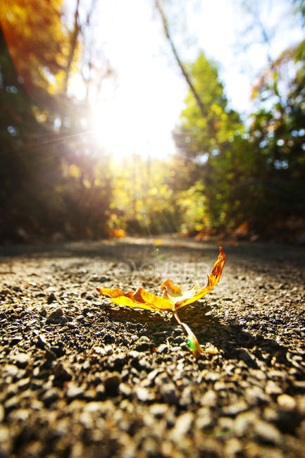 Close-up of autumn leaf on dirt path with backlit — Stock Photo
