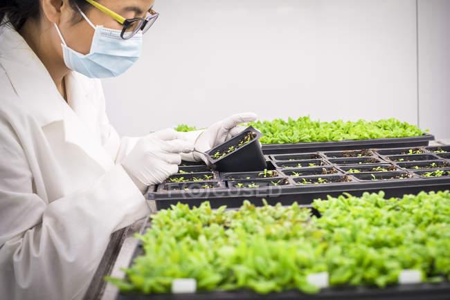 Femme scientifique asiatique examinant des plantes en laboratoire . — Photo de stock