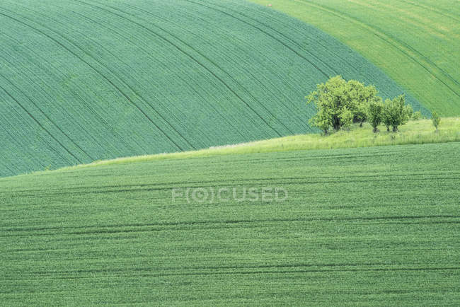 Scenic view of rolling green farmland landscape with trees, Czech Republic — Stock Photo