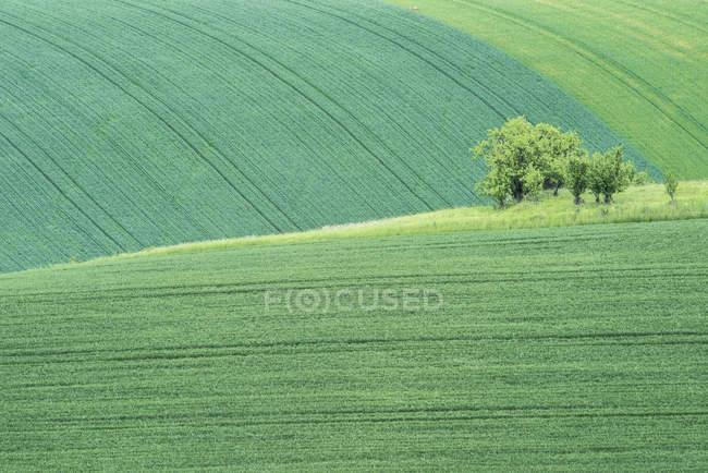 Живописный вид на зеленый фермерский ландшафт с деревьями, Чехия — стоковое фото