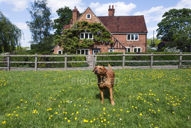 Собаки играют на поле в сельской местности — стоковое фото