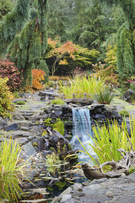 Autumn leaves on bushes around waterfall feature in landscaped garden — Stock Photo