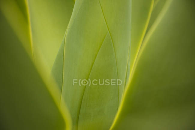 Close-up of green leaves growing on plant — Stock Photo