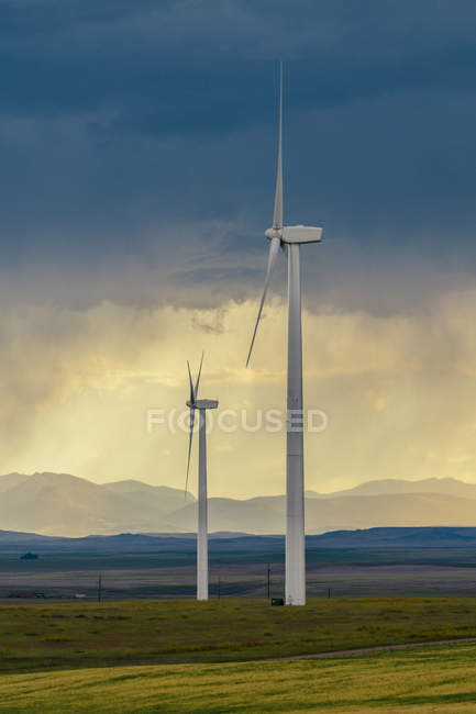 Wind turbines rotating in field at sunset — Stock Photo