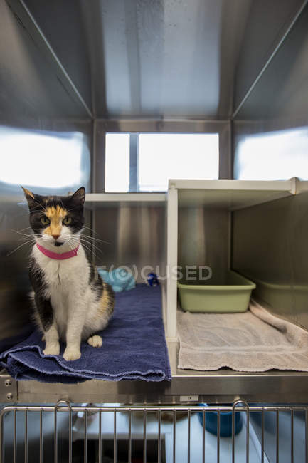 Cat sitting in cage at animal shelter — Stock Photo