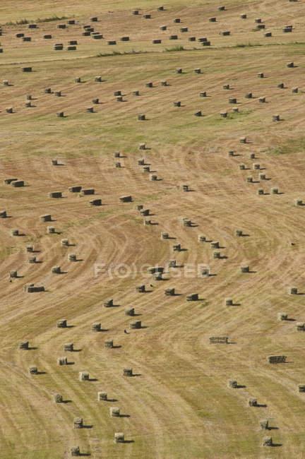 Vista aérea do teste padrão das balas de feno no campo rural — Fotografia de Stock