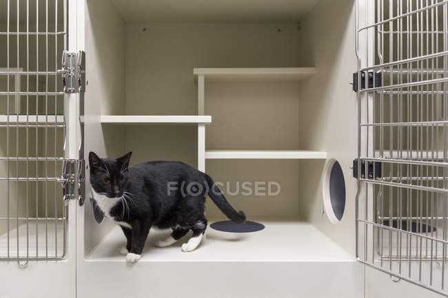 Black and white cat in open cage in animal shelter — Stock Photo