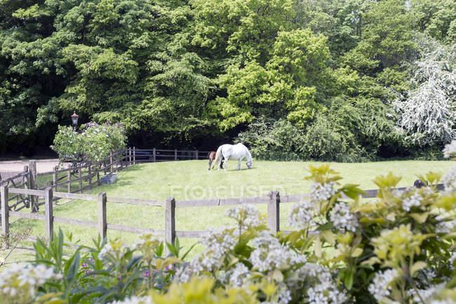 Pasto de caballos y potros en pastos rurales - foto de stock