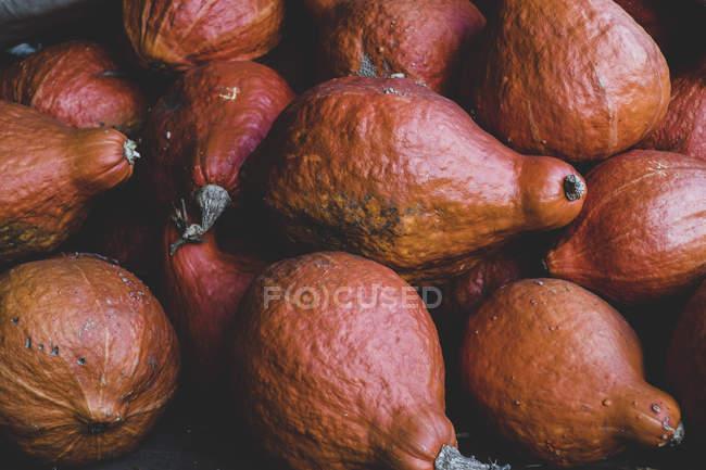 Close-up of freshly harvested orange Hubbard pumpkins. — Stock Photo