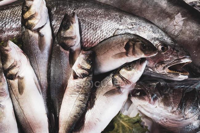 Großaufnahme von frischem Fisch am Marktstand für Meeresfrüchte. — Stockfoto