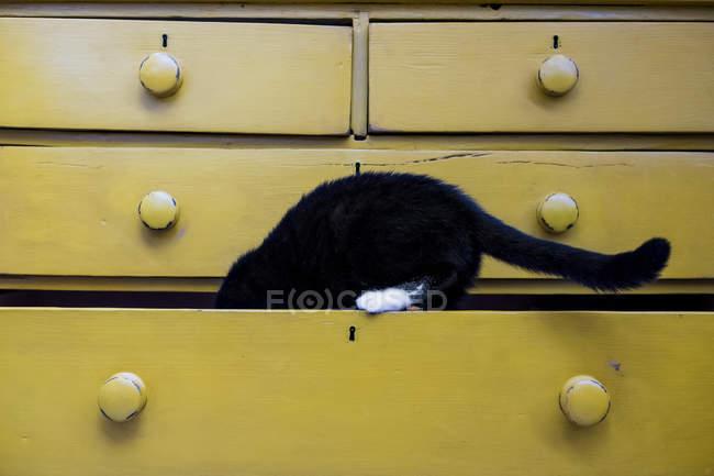 Gros plan du chat noir avec patte blanche dans le tiroir de la commode jaune . — Photo de stock