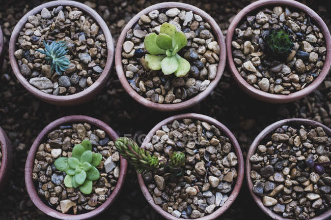 Top view of succulents plants planted in gravel in terracotta pots. — Stock Photo