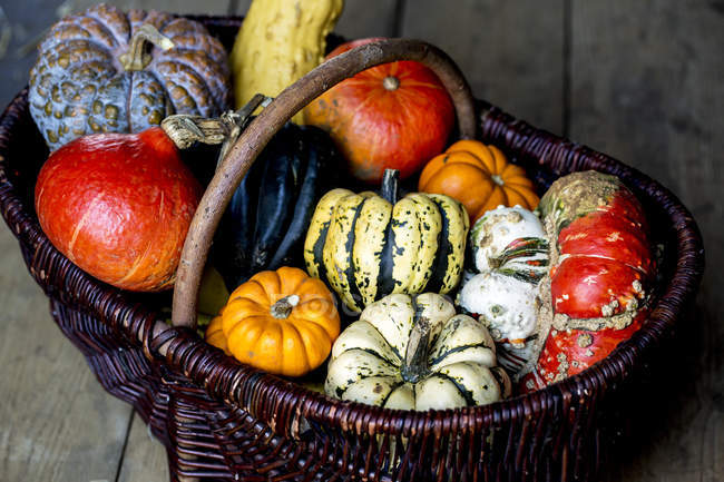 High angle view of basket with variety of fresh harvested pumpkins. — Stock Photo