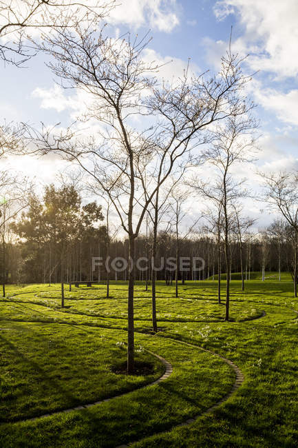 Green garden in spring with young trees in grass with paths cut through ground in Amersham, Buckinghamshire, England — Stock Photo