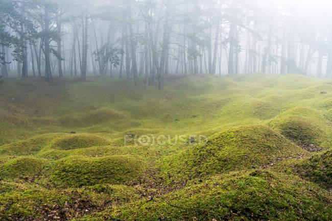 Floresta enevoada com montes e árvores da grama no fundo. — Fotografia de Stock