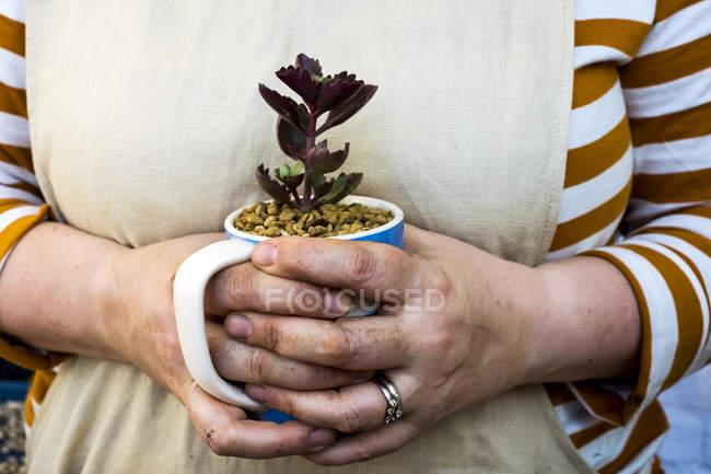 Nahaufnahme einer Person mit Kaffeebecher mit Sukkulente. — Stockfoto