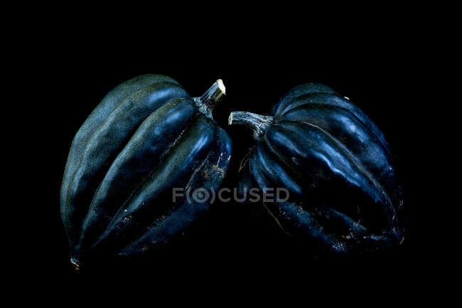 Close-up of two dark blue ribbed pumpkins on black background. — Stock Photo
