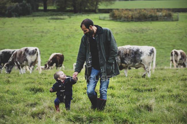 Hombre y niño pequeño caminando en pastos con vacas Longhorn Inglés en el fondo. - foto de stock
