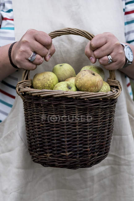 Close-up of woman holding brown wicker basket with freshly picked apples. — Stock Photo