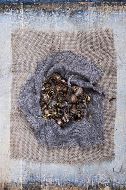 Close-up of brown onion bulbs on sack cloth on grey background. — Stock Photo