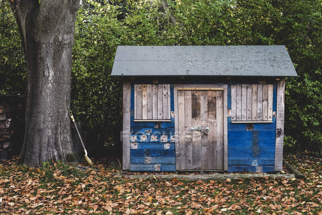 Exterior view of wooden shed with blue walls in garden, autumn leaves on lawn. — Stock Photo
