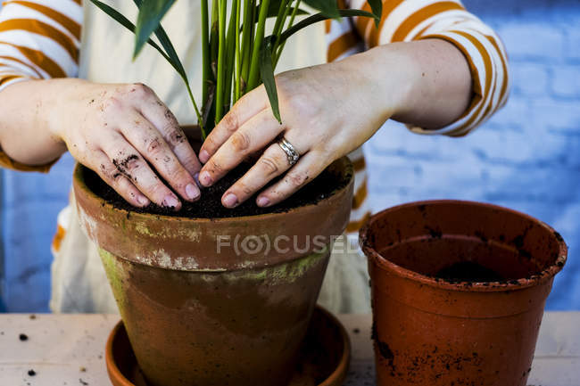 Midsection et les mains de la femme usine de rempotage en pot de terre cuite . — Photo de stock