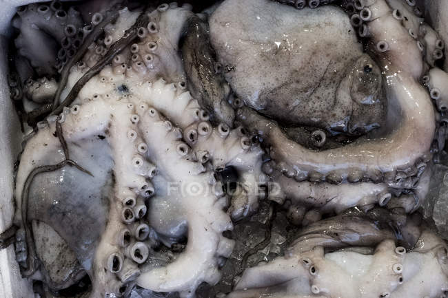 Close-up of fresh octopus at seafood market stall. — Stock Photo