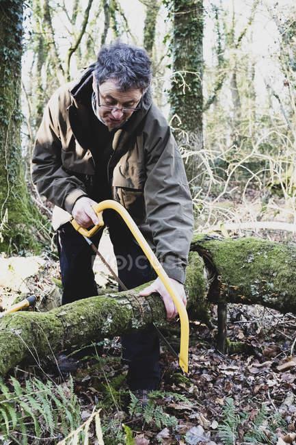 Mann steht im Wald und fällt Baum mit Bogensäge. — Stockfoto