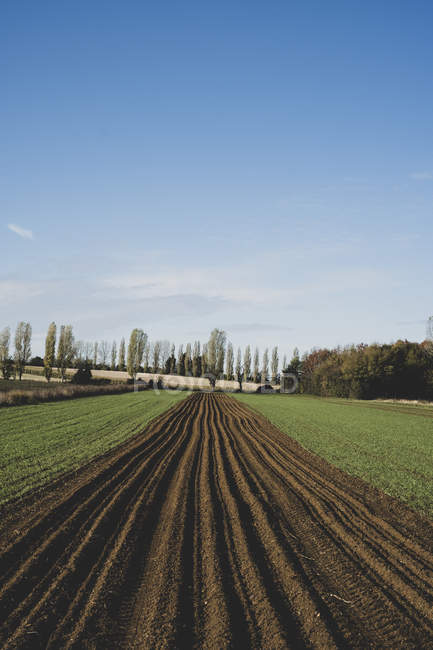 View along freshly ploughed field, poplars and woodland in background. — Stock Photo