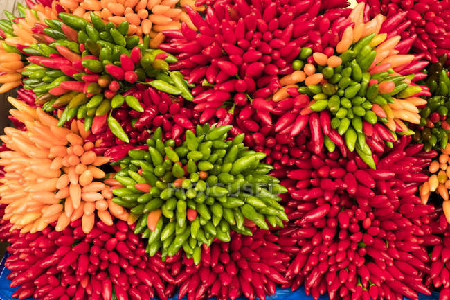 Close-up of large bunches of fresh red, green and orange chilies at market stall. — Stock Photo