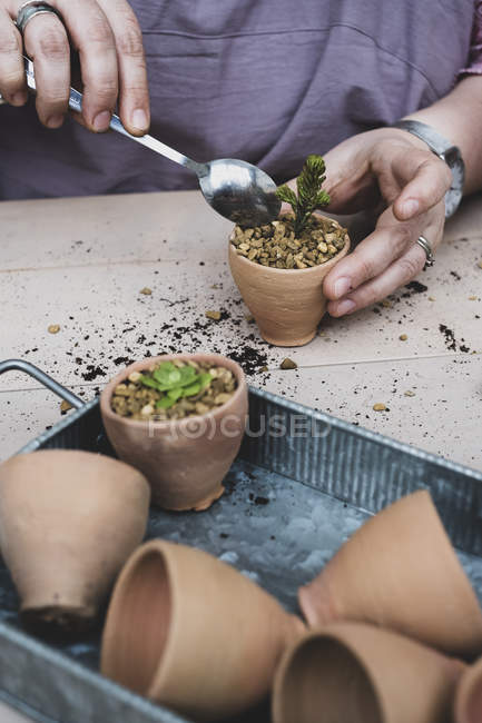 Close-up of person planting succulents in gravel in terracotta pots. — Stock Photo