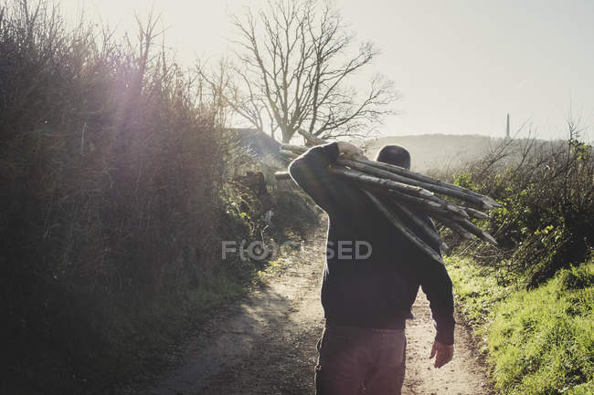 Rear view of man walking down rural path, carrying bunch of wooden pleachers used in traditional hedge building. — Stock Photo
