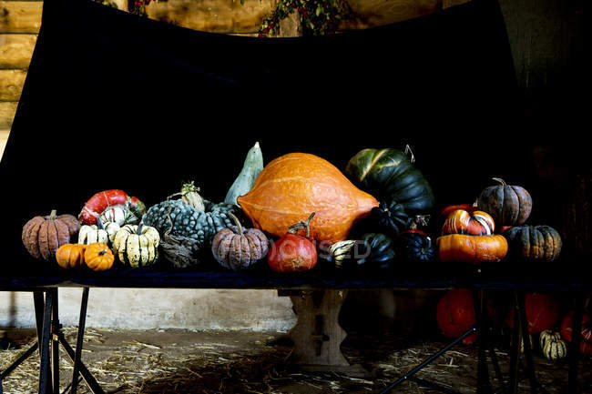 Large variety of freshly harvested pumpkins on black table. — Stock Photo