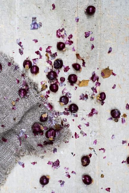 Cebolas e peles vermelhas lustrosas pequenas no fundo cinzento. — Fotografia de Stock